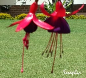 Seraphic Events Management Flowers Photos Gallery-1